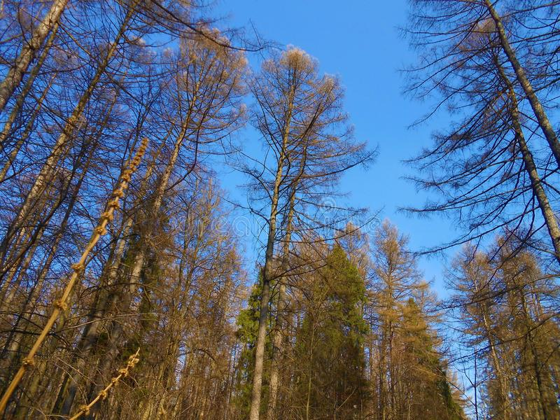 On the forest marge in spring clear day. royalty free stock images