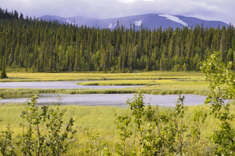 Download Forest marsh and mountain stock image. Image of wetlands - 17836273