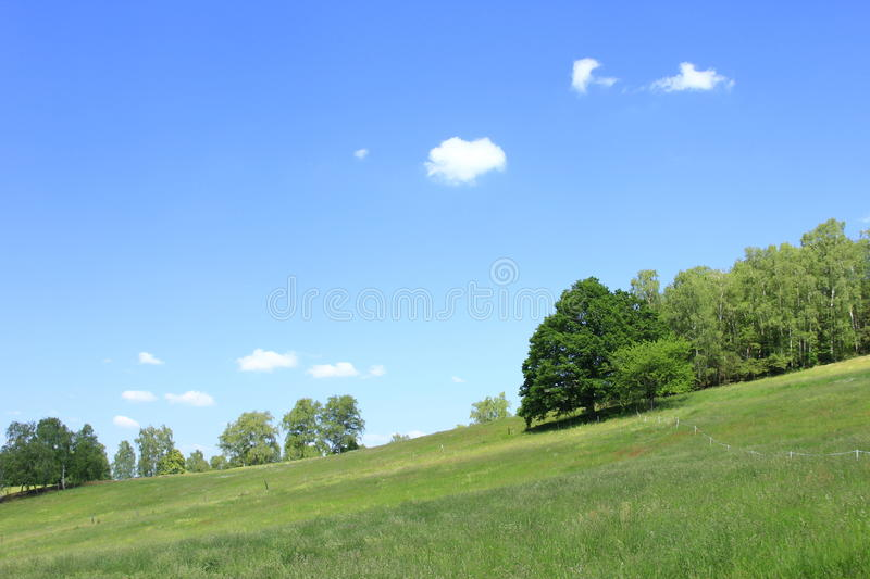 Download Forest and meadow stock image. Image of pictorial, summer - 25232993