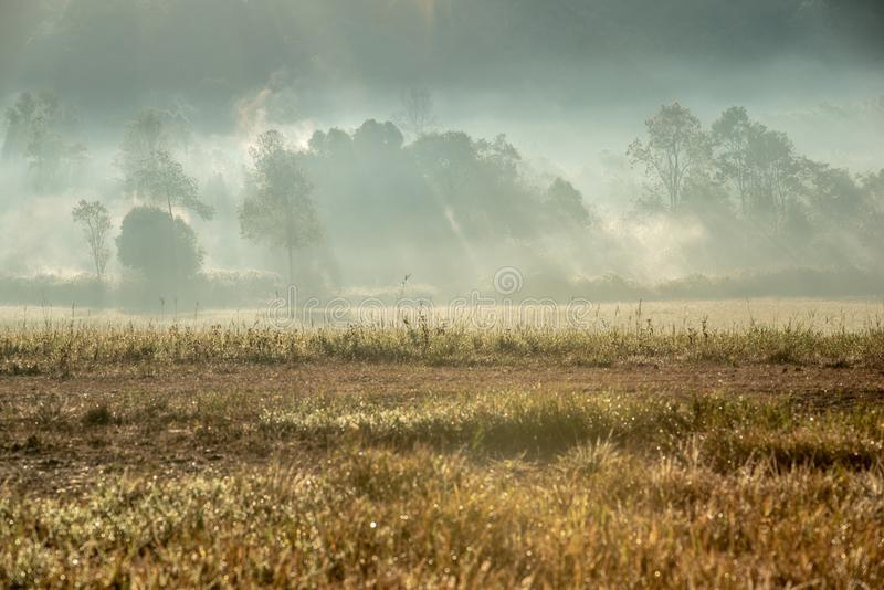 Forest and a meadow with foggy atmosphere stock photography