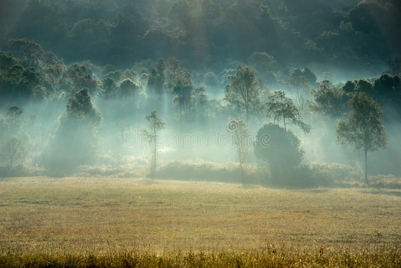 Forest and a meadow with foggy atmosphere on the morning royalty free stock image