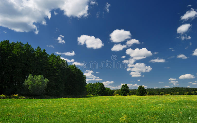 Forest meadow in Hungary royalty free stock images