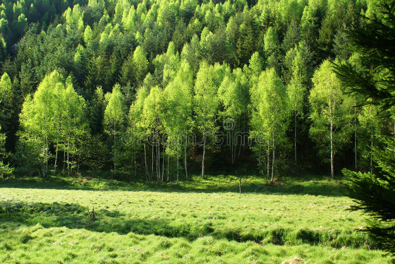 Forest meadow in spring stock image