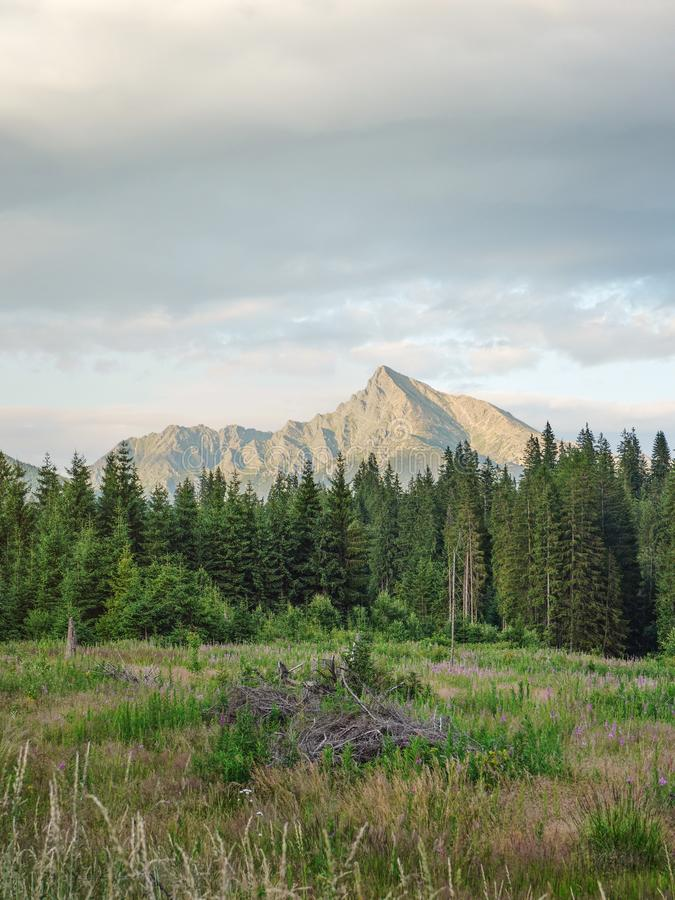 Forest meadow, trees and mount Krivan peak Slovak symbol in distance, lit by summer evening sun.  royalty free stock photography