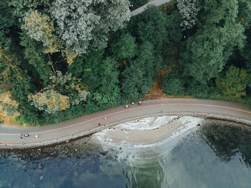 Forest Meets Ocean royaltyfri bild
