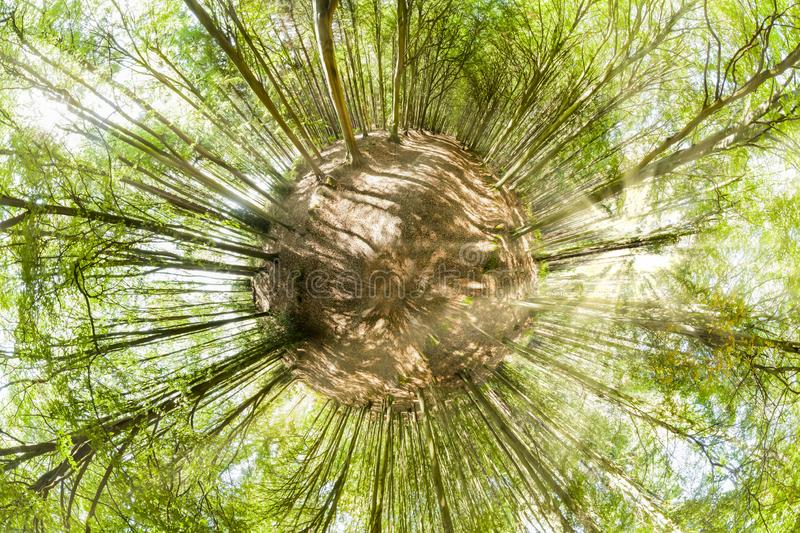 Forest mini planet viewpoint in spring royalty free stock images