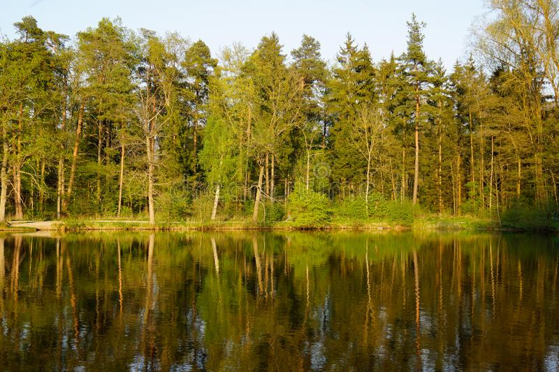 Forest mirror in lake at sunset royalty free stock images