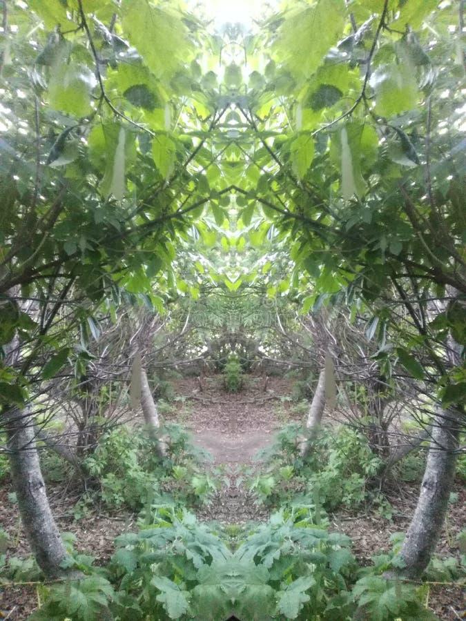 Forest Mirror Path stockfotografie