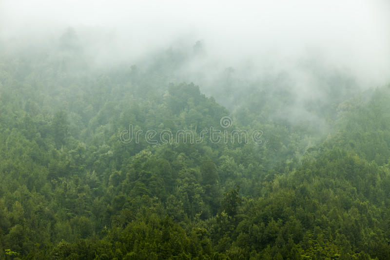 Download Forest Mist Stock Images - Image: 27045784
