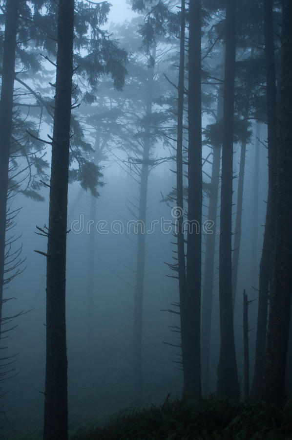 Forest Mist images stock