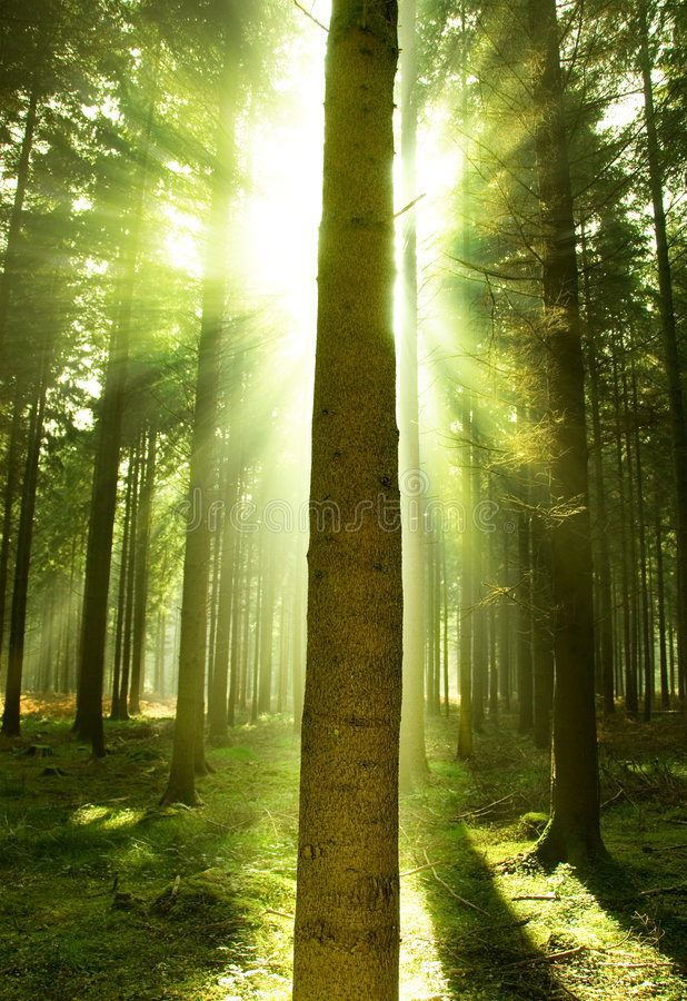 Download Forest Mist stock image. Image of grass, outdoor, morning - 6552211