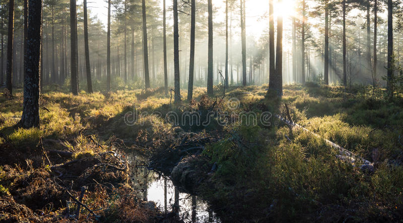 Forest Mist Rays stock image