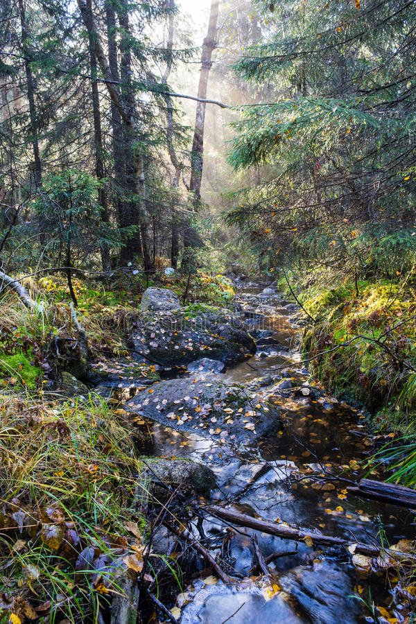 Forest Mist Rays And Stream stock images