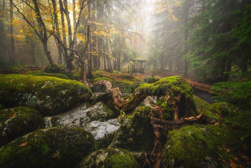 forest misty στοκ εικόνα με δικαίωμα ελεύθερης χρήσης