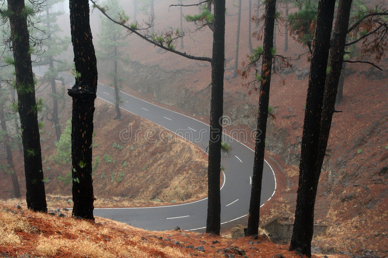 Forest misty road royalty free stock photo