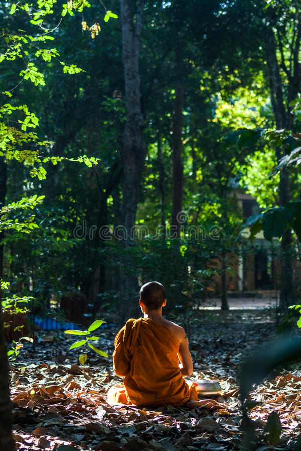 Forest monk royalty free stock photography