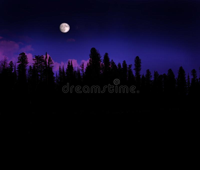 Forest Moonrise royalty free stock photos
