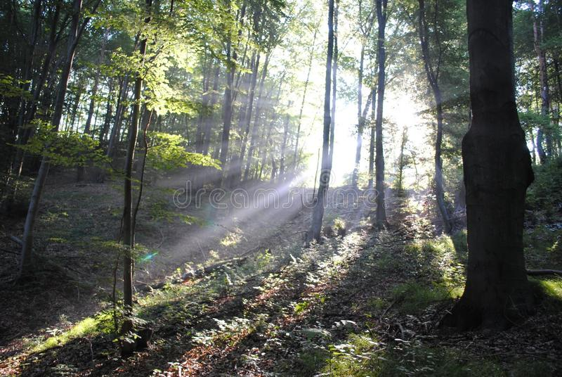 Forest in morning stock photography