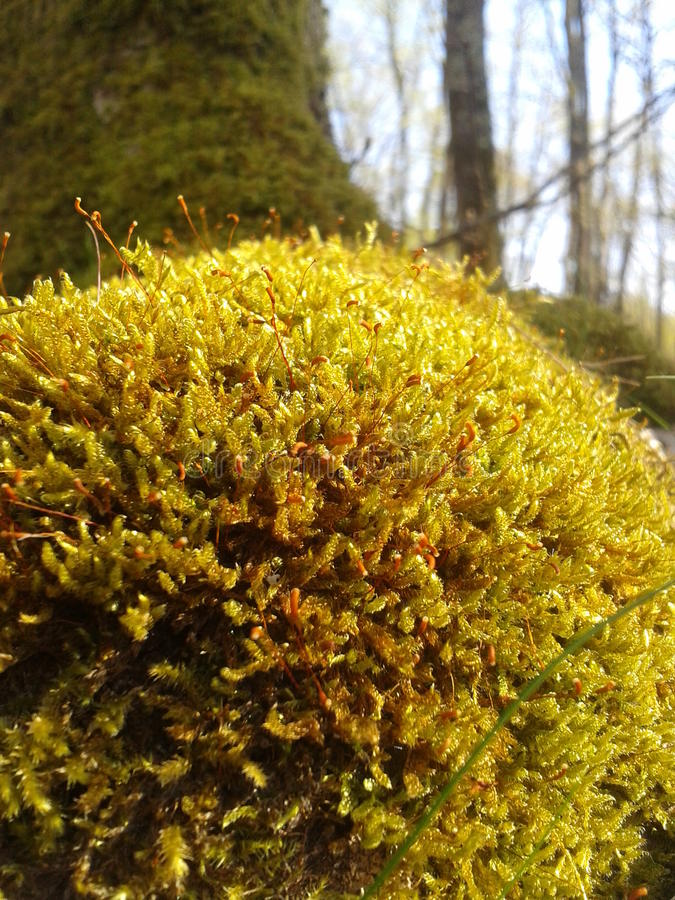 Forest Moss fotos de stock