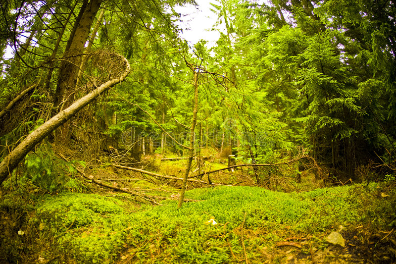 Forest and moss royalty free stock images