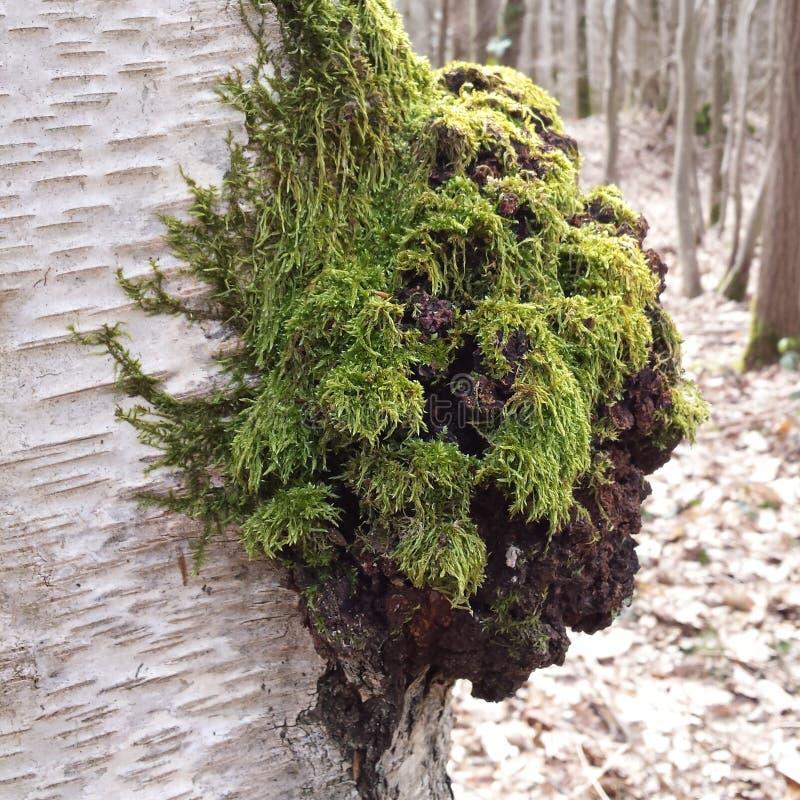 Forest Moss royaltyfria bilder