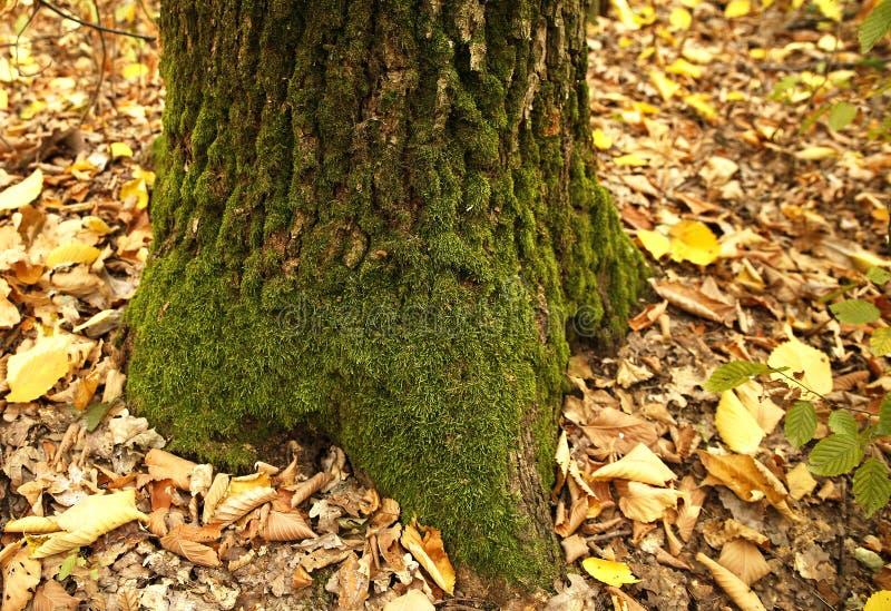 Download Forest Moss arkivfoto. Bild av tillväxt, natur, stillsamt - 78729828