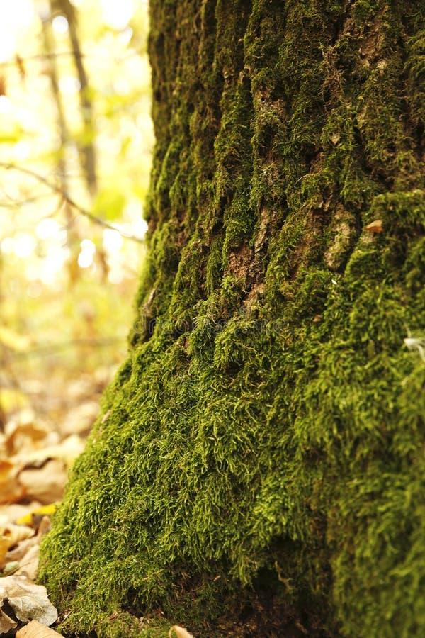 Download Forest Moss arkivfoto. Bild av tree, sommar, stam, färg - 78729844