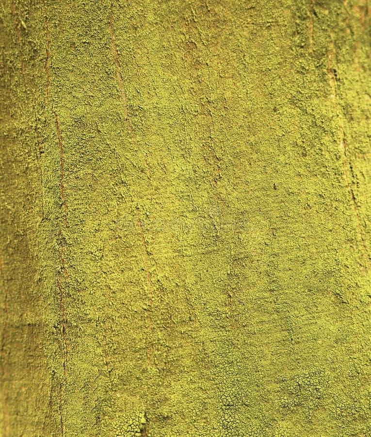 Download Forest Moss arkivfoto. Bild av stillsamt, växt, stem - 78730134