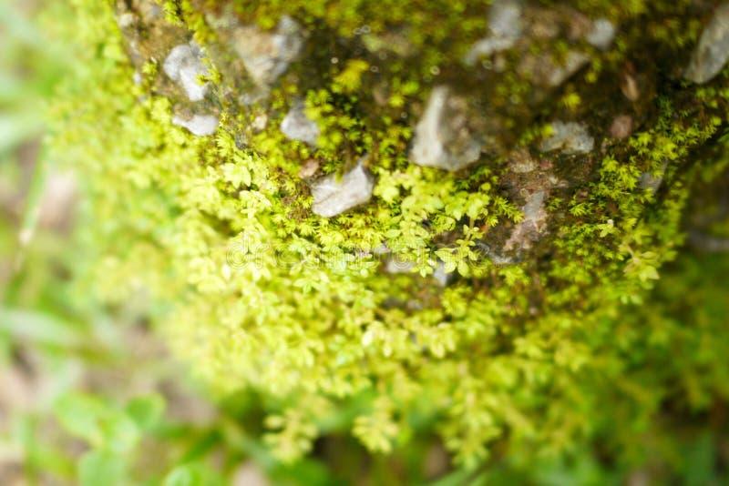 Forest Moss stockbilder