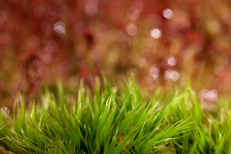 Forest moss stock photo