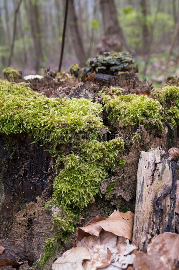 The Forest moss royalty free stock photo