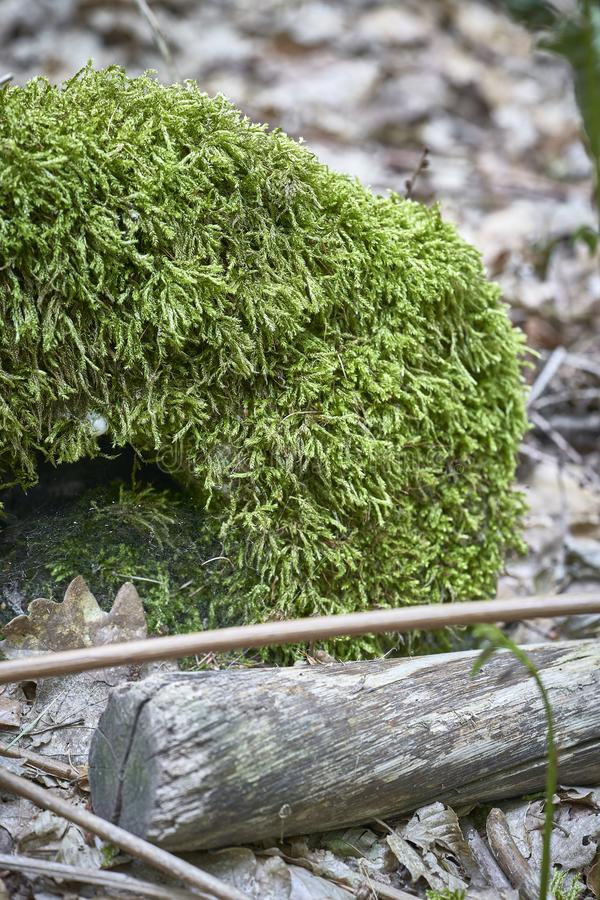 Forest with moss in the trees.  stock photos
