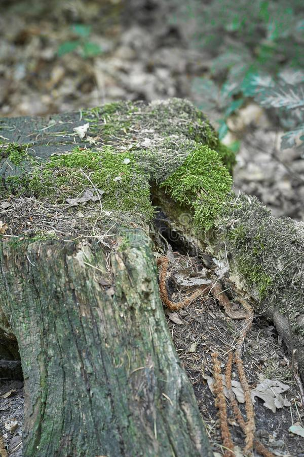 Forest with moss in the trees.  royalty free stock photos