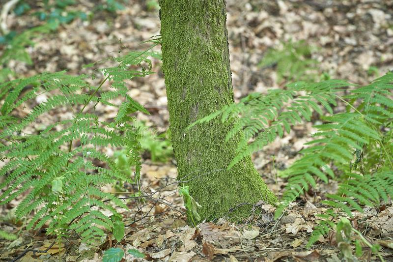Forest with moss in the trees.  royalty free stock photography