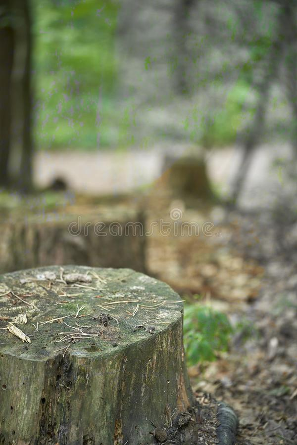 Forest with moss in the trees.  royalty free stock photo