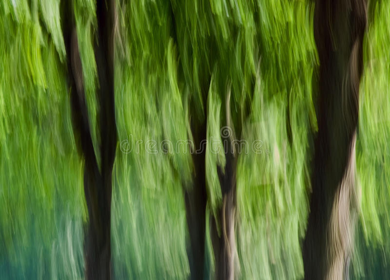 Forest-motion blur royalty free stock photography