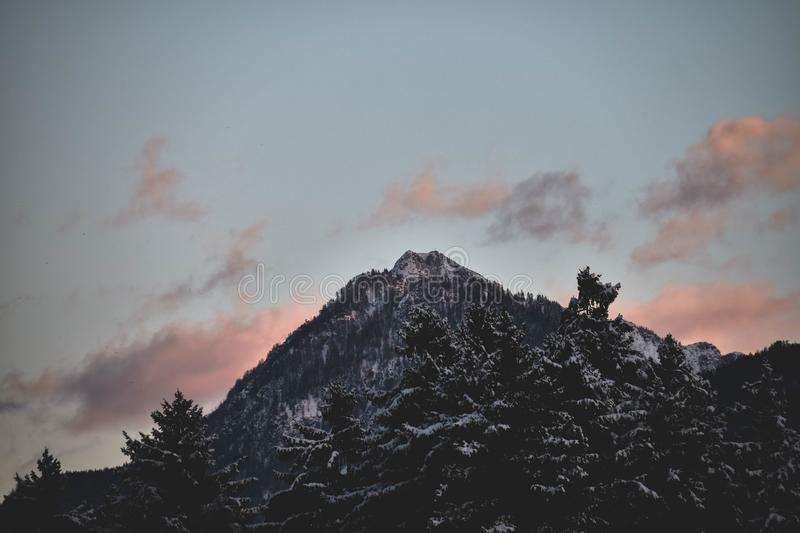 Forest Mountain stock photography