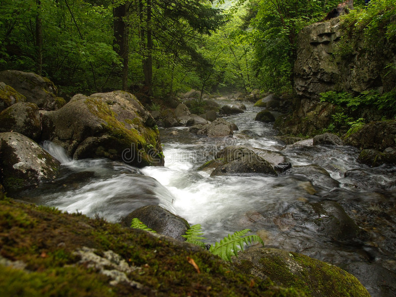 Forest mountain creek fall royalty free stock photo