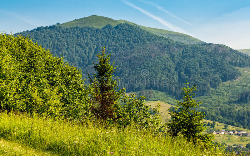 Forest on a mountain hillside in rural area. Forest in mountain rural area. green agricultural field on a hillside. beautiful summer scenery in pleasant weather royalty free stock photography