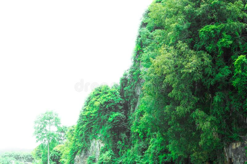 Forest mountain landscape sunlight in the summer on white background with copy space add text royalty free stock photos