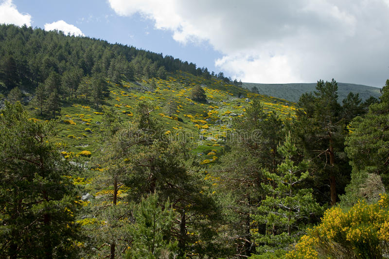 Download Forest In A Mountain In Spring Stock Image - Image of valley, spring: 90703751