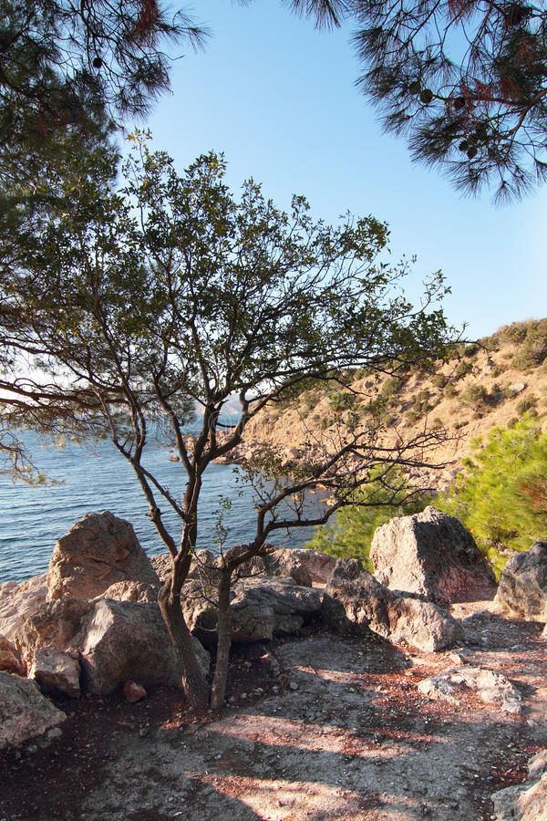 Forest on the mountains, Crimea royalty free stock photography