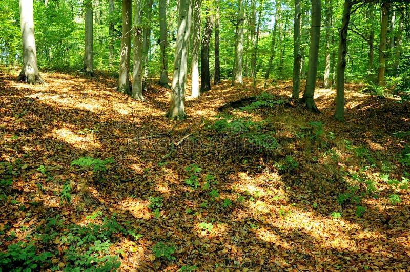 Forest near Pisek, Southern Bohemia, Czech Republic royalty free stock photography