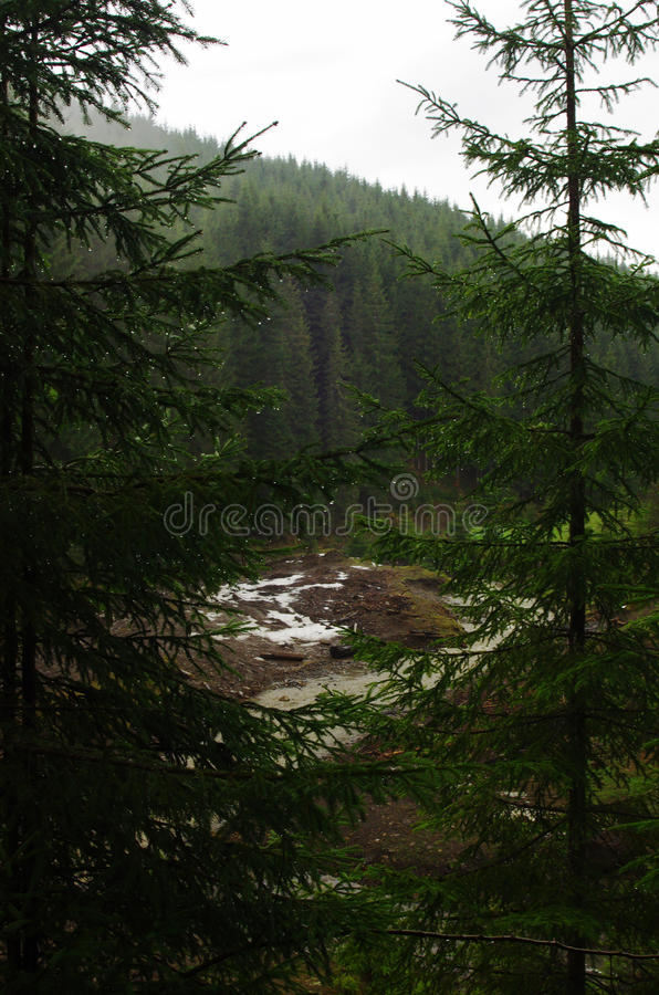 Forest in mountains stock photos