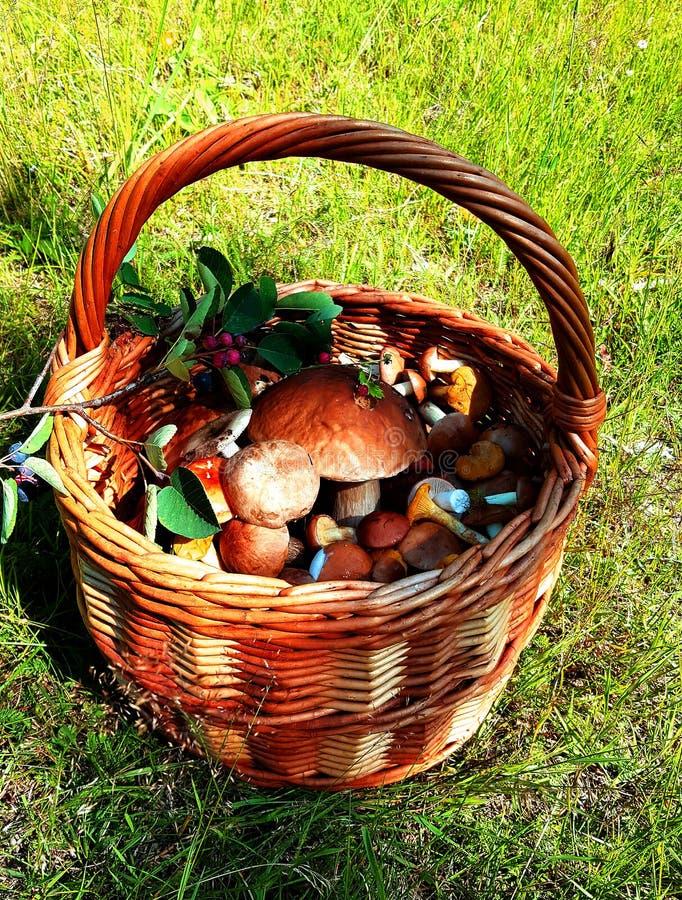 Forest Mushroom Basket immagine stock libera da diritti