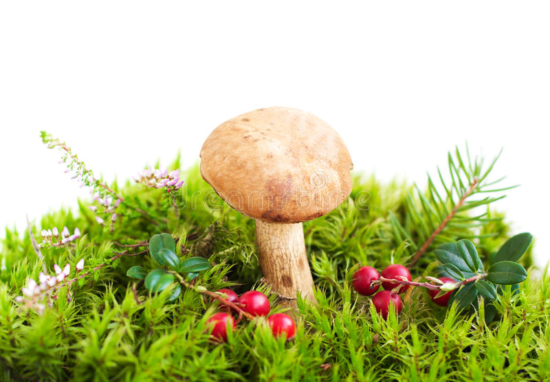 Download Forest mushroom in moss stock photo. Image of healthy - 33684458