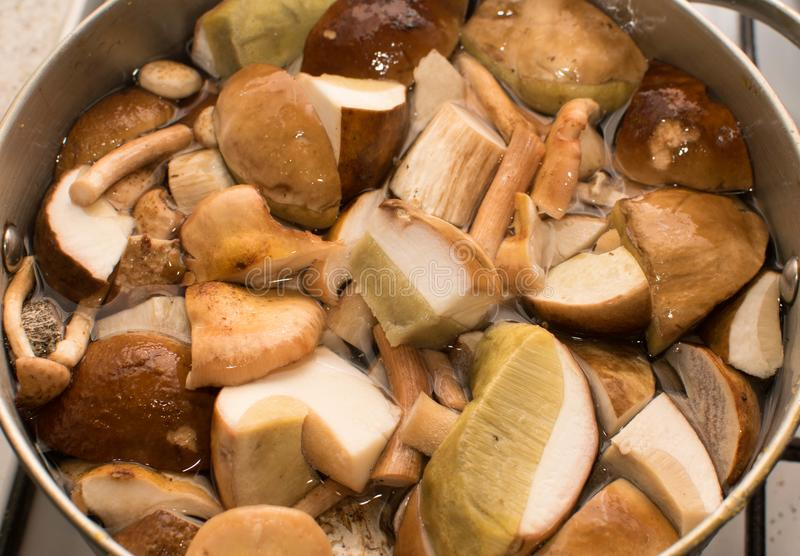 Forest mushrooms are cooked in a saucepan royalty free stock photo