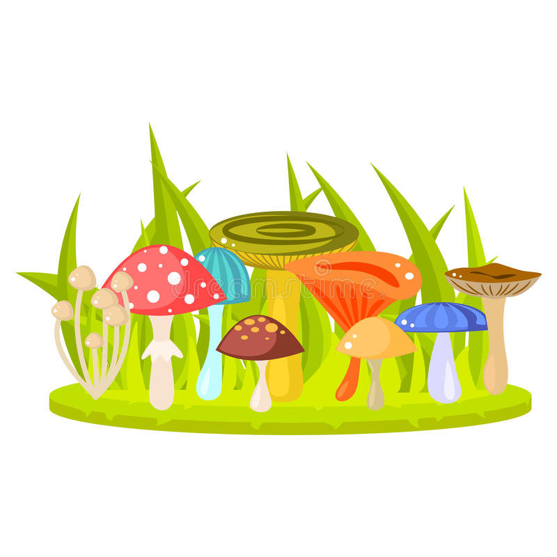Forest mushrooms on grass lawn vector illustration. Forest mushrooms on grass lawn vector. Cartoon mushrooms, fungus, amanita, russule and saffron milk cap royalty free illustration