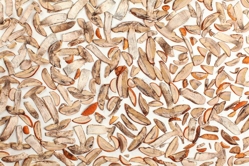 Forest mushrooms - orange cup scaber stalk - cut to thin slices, drying on white paper, photo from above.  royalty free stock photos