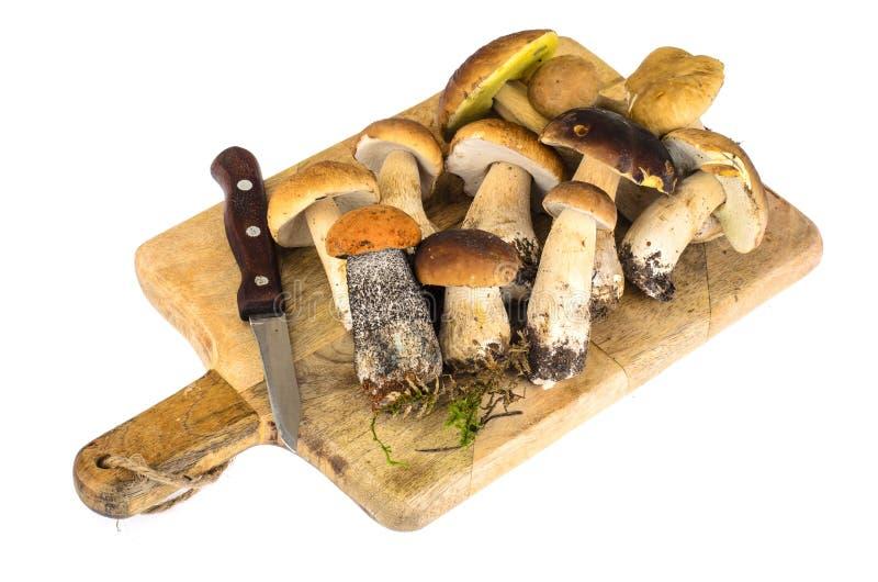 Forest mushrooms on white background. Studio Photo stock photos